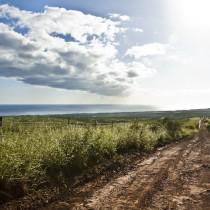 A dirt road overlooking the ocean.